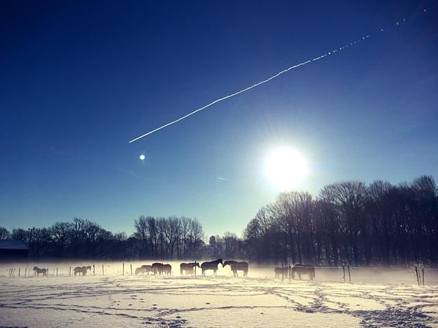 snowhorses_IMG_1383